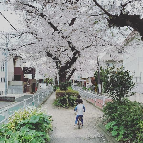 外出自粛な週末。仕事に追われつつ、様々な影響を考えリスクヘッジに家の中…家で仕事。子供たちは、体力有り余り発散のために家の前でスケボーやキックボード。午後は少しだけ散歩。実家の裏の桜並木をただ散歩。今この時を甘く考えず、愛する街、家族、仲間、クライアントのために皆さん安全第一にいてください。皆さんの安全と安心を祈ります。BY 湘南ジャーナル社一同