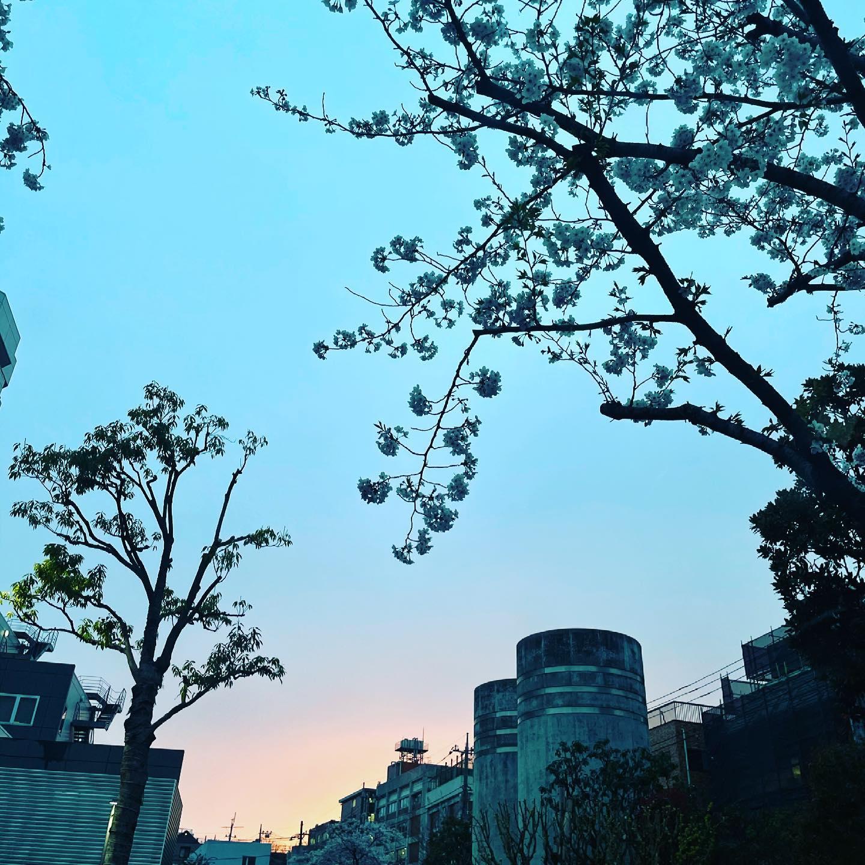 日本の春は美しい。コロナ禍は静かにお花に酔いましょ。