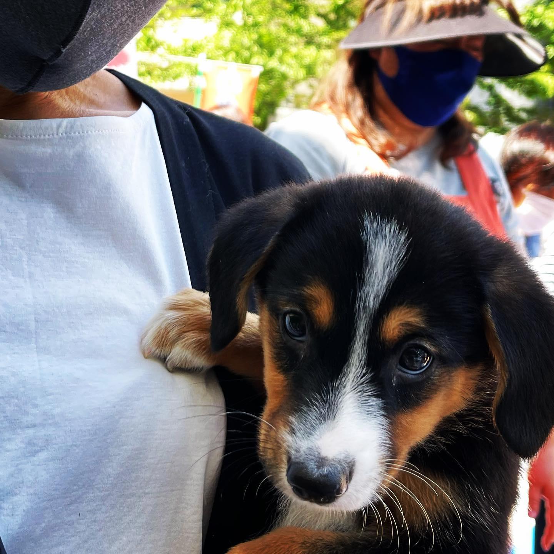 密かにジャーナル犬きまりました!捨て犬野犬、保護パピーをひきとりました。平塚で見かけたらジャック!と声かけてください。ジャーナルラックジャック!